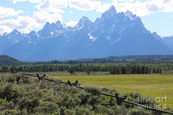 Photograph - Grizzly Country by Carol Groenen