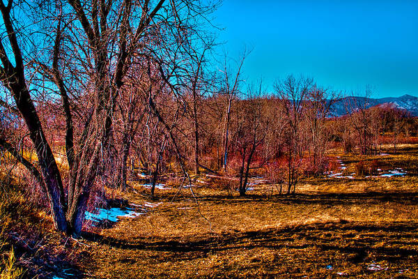 Photograph - Grove Of Trees by David Patterson