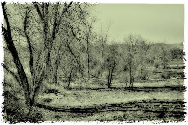Photograph - Grove Of Trees II by David Patterson