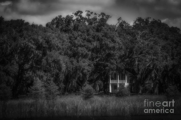 Photograph - Grove Plantation And Live Oaks by David Waldrop