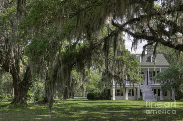 Photograph - Grove Plantation by David Waldrop