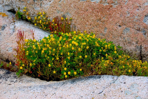 Wall Art - Photograph - Growing In The Cracks by Brent L Ander