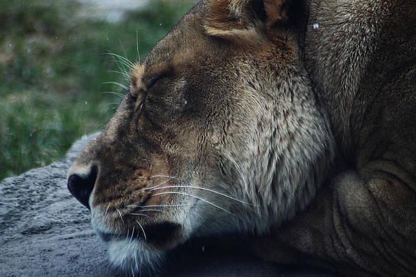 Photograph - Grumpy Kitty by Scott Hovind