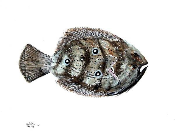 Painting - Gulf Flounder by J Vincent Scarpace