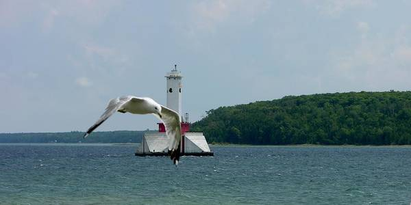 Photograph - Gull And Lighthouse by Keith Stokes