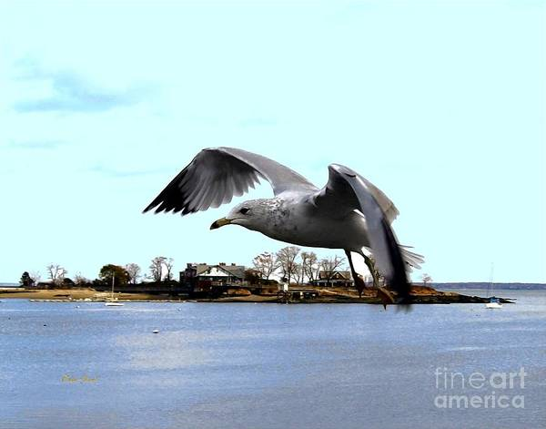 Digital Art - Gull In Flight by Dale   Ford