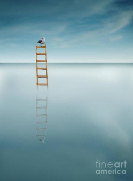 Rungs Wall Art - Photograph - Gull On A Ladder In The Sea by Jill Battaglia