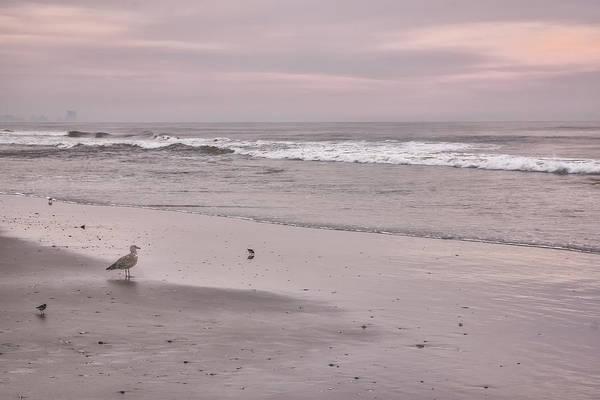 Photograph - Gull On A Soft Dawn by Tom Singleton