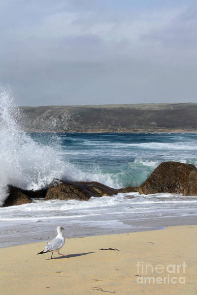 Sennen Cove Photograph - Gull On The Sand by Linsey Williams