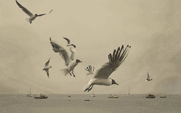 Linsey Williams - Gulls