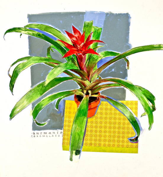 Painting - Guzmania  by Cliff Spohn