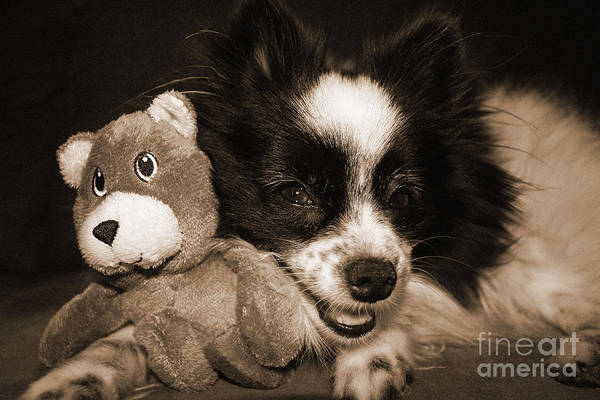 Hair Of The Dog Wall Art - Photograph - Gypsy With Billy Beaver by Kelly Holm