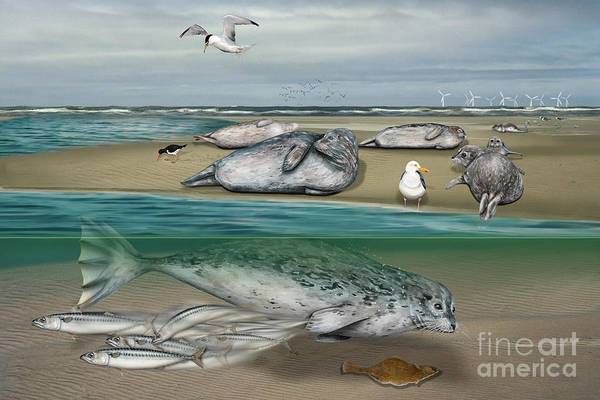 Painting - Habitat Common Seals  - Pinnipeds - Marine Mammals - Mudflat Tideland - Phoque Commun-banc De Sable  by Urft Valley Art