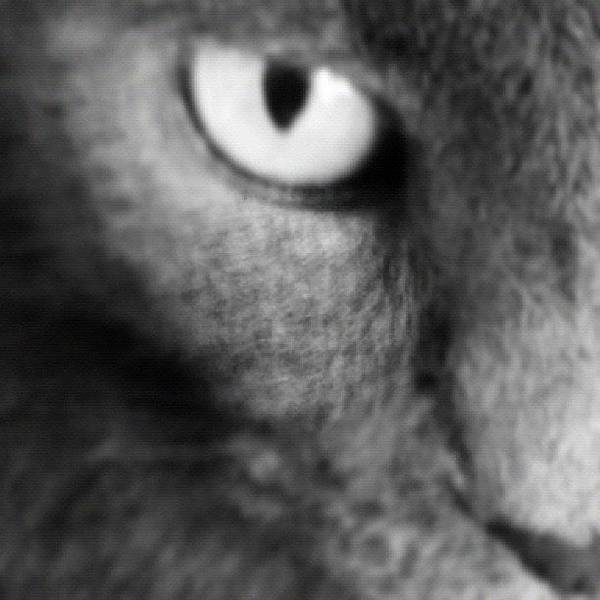 Blackandwhite Wall Art - Photograph - Half Cat by Cameron Bentley