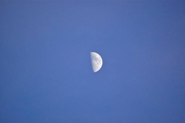 Photograph - Half Moon by Mary McAvoy