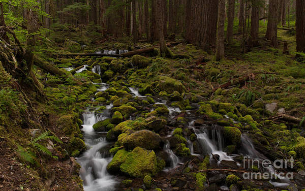 Olympics Photograph - Hall Of The Mosses by Mike Reid