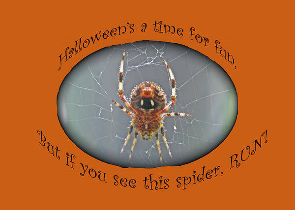Wall Art - Photograph - Halloween Greeting Card - Marbled Orb Weaver Spider by Mother Nature