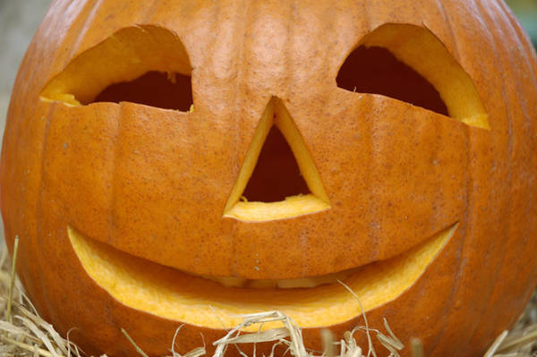 Cucurbitaceae Photograph - Halloween Pumpkin by Matthias Hauser