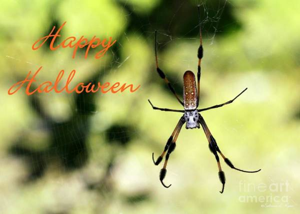 Photograph - Halloween Spider Card by Sabrina L Ryan