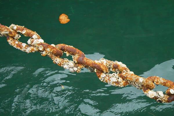 Photograph - Hamilton Harbor Chain by Tom Singleton