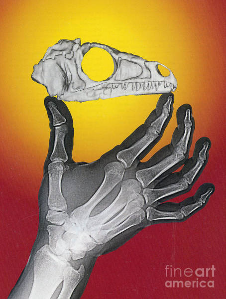 Photograph - Hand And Eoraptor by Science Source