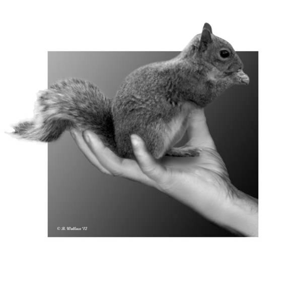 Sfx Photograph - Hand Full Of Squirrel by Brian Wallace