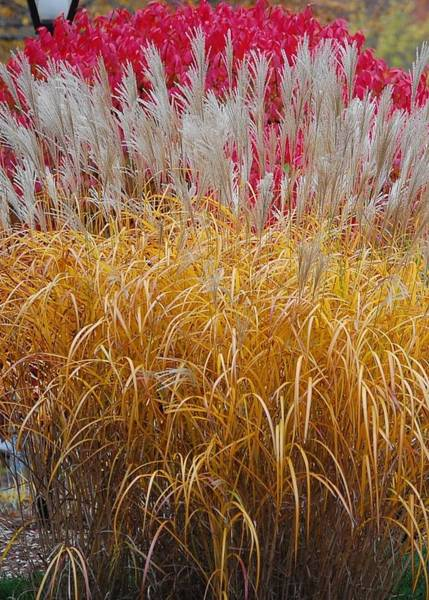 Photograph - Hand Of Man - Grasses by Mary McAvoy