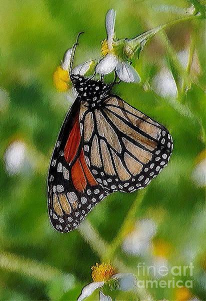 Butterfly On Flower Digital Art - Hang On 2 by Amanda Starr