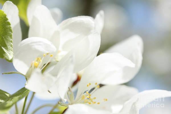 Photograph - Happy Blossoms by Rachel Duchesne