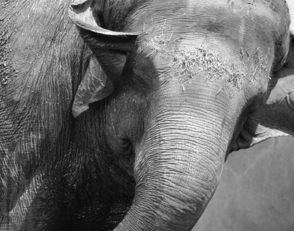 Photograph - Happy Elephant by Maggy Marsh