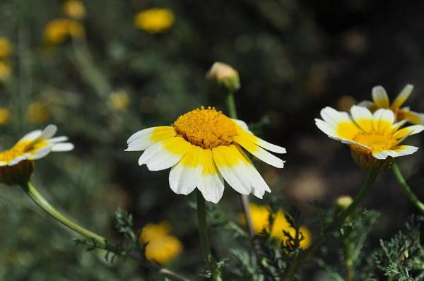 Photograph - Happy Spring  by Bridgette Gomes