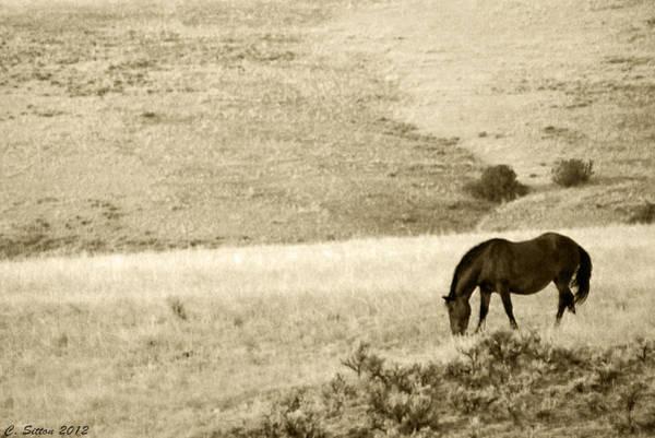 Photograph - Happy Trails 2 by C Sitton