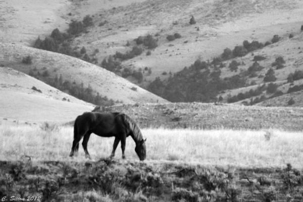 Photograph - Happy Trails by C Sitton