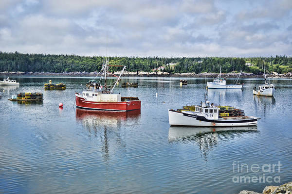 Photograph - Harbor Life by Traci Cottingham