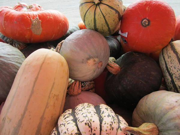 Acorn Squash Photograph - Harvest Squash by Kym Backland
