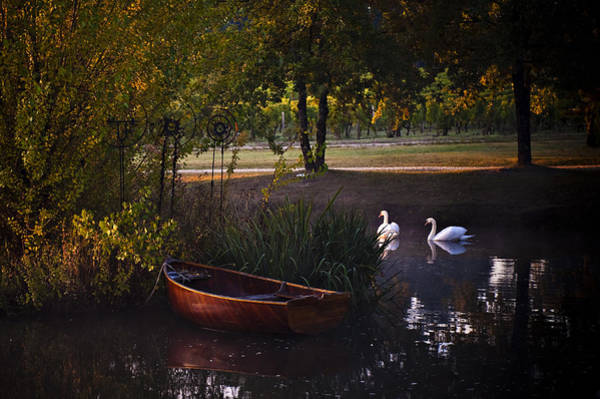 Swan Boats Photograph - Harvest Waters by Laura Olson