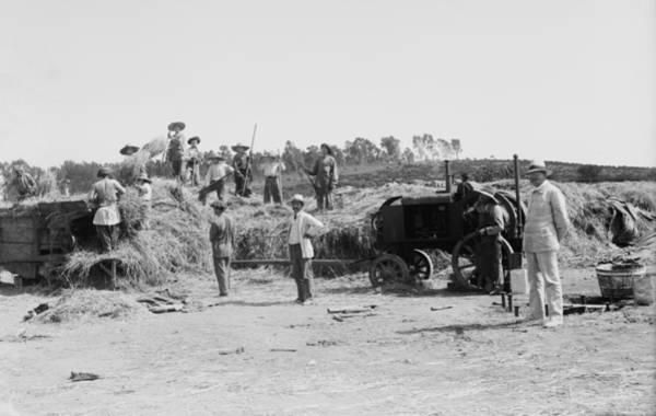 Kibbutz Photograph - Harvesting Grain On A Jewish Communal by Everett
