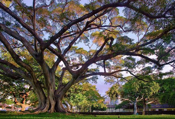 Photograph - Hawaii Tree by Dave Dilli