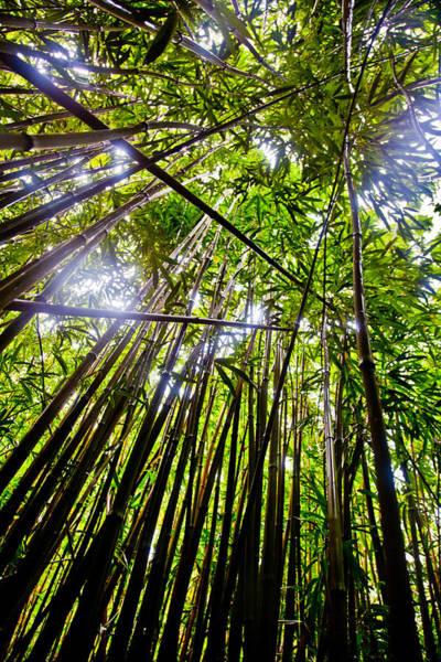 Wall Art - Photograph - Hawaiian Bamboo Forest by Patrick  Flynn