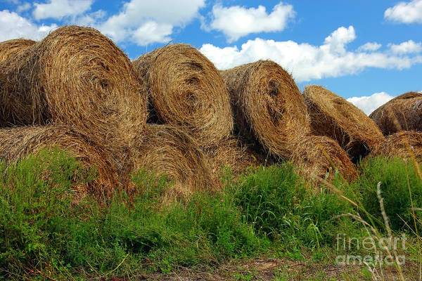 St Ignace Wall Art - Photograph - Hay Buddies by Sophie Vigneault