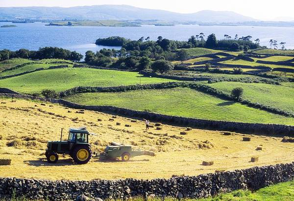 Horizontally Photograph - Hay Making, Lough Corrib, Co Galway by The Irish Image Collection
