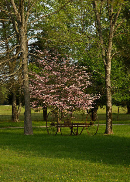 Hay Rake Photograph - Hayrake And Dogwood Blossoms 2 by Douglas Barnett