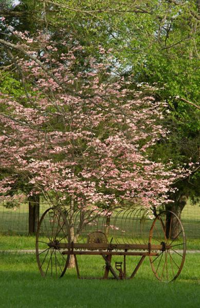 Hay Rake Photograph - Hayrake And Dogwood Blossoms by Douglas Barnett