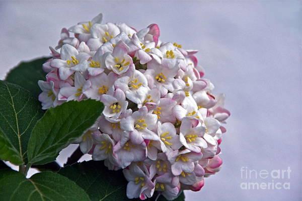 Photograph - Heavenly Fragrance by Byron Varvarigos