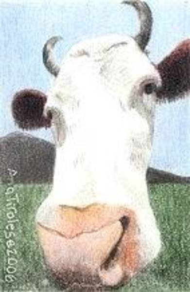 Drawing - Hello Cow by Ana Tirolese