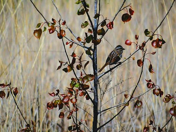 Photograph - Hello Sparrow by Beth Akerman