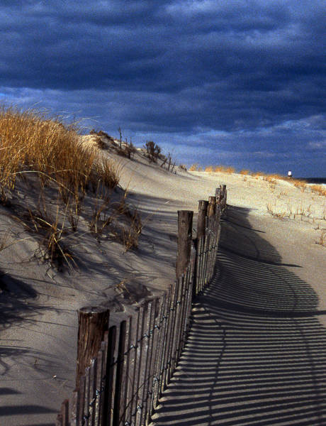 Delaware State Park Wall Art - Photograph - Henlopen Dunes by Skip Willits