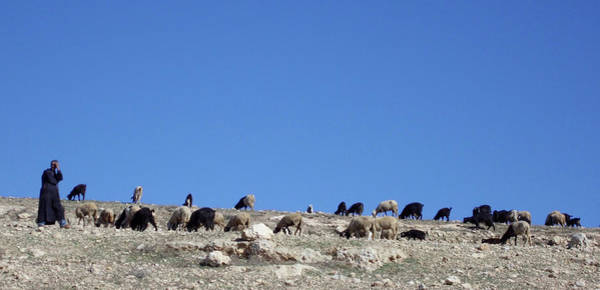 Photograph - Herd In The Atlas Mountains 02 by Miki De Goodaboom