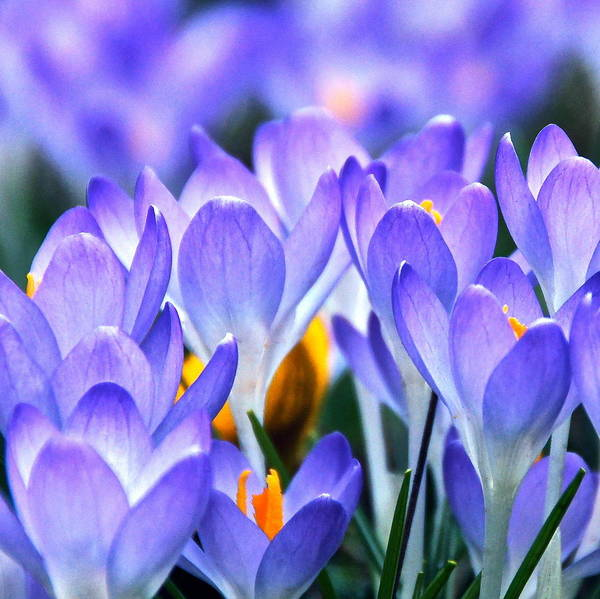 Photograph - Here Come The Croci by Byron Varvarigos