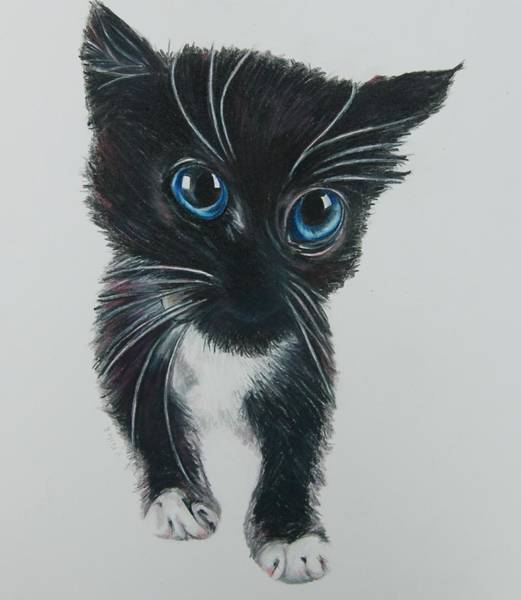 Nine Lives Drawing - Here Kitty by Joan Pollak